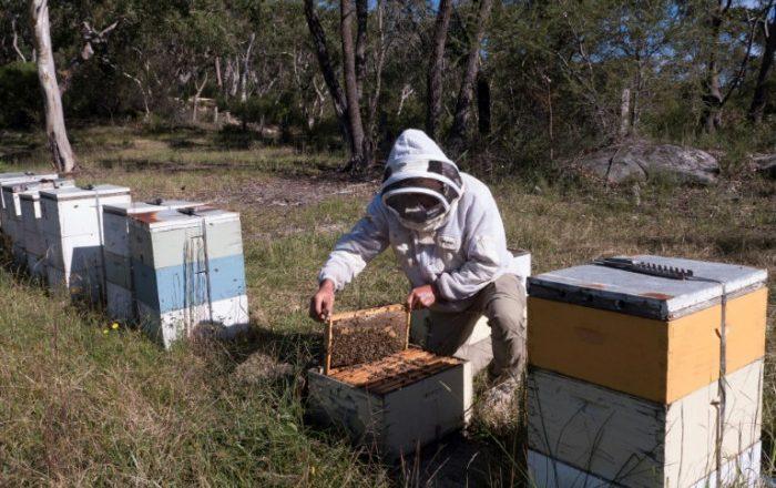 Australia, NZ clash over manuka honey label