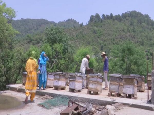 Beekeepers of remote village of Rajouri seeks govt help to market honey
